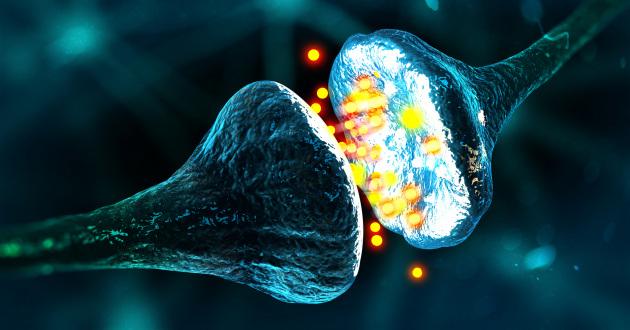 I segnali elettrochimici tra neuroni in una sinapsi, il punto di scambio tra segnali nervosi.|Shutterstock