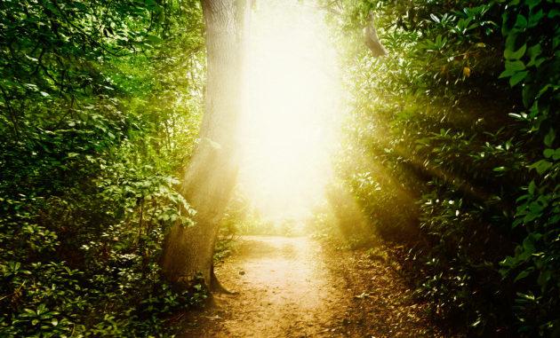 Una luce bellissima: una delle immagini più ricorrenti, nelle esperienze pre-morte.|Shutterstock