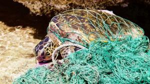 Una tartaruga avvolta in una rete da pesca abbandonata in mare. L'immagine è tratta dal film documentario Turtley Addict, dedicato al recupero e alla riabilitazione delle tartarughe, proiettato nell'ambito dell'Ocean Film Festival Italia (vedi il programma). | Turtley Addict / Ocean Film Festival Italia