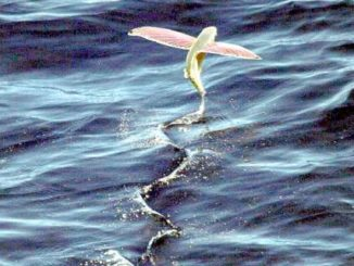 Rischio esaurimento ossigeno in laguna a Venezia