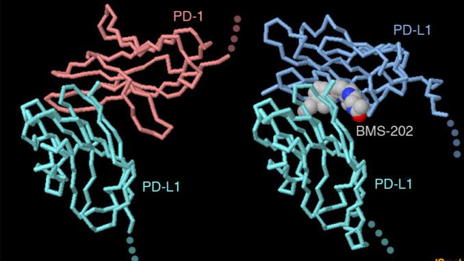 Scoperto come bloccare la proteina PD-L1 del cancro