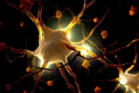 Close up of human nerve cells © Ikon Image / AGF