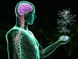 L'uso di marijuana altera regioni del cervello nei ragazzi