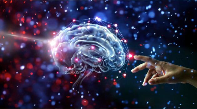 Le sensazioni di piacere e ricompensa sono regolate dal cervelletto