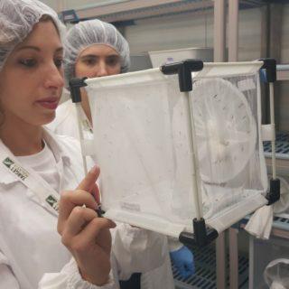 laboratori-malaria-zanzara-terni