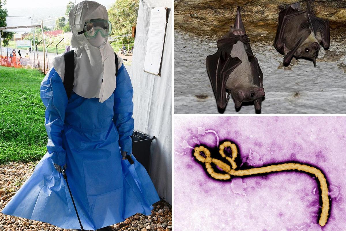 Rischio di una nuova epidemia diffusa dai pipistrelli
