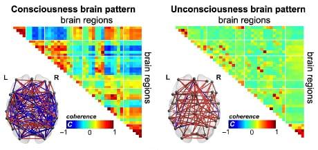 Quando si è coscienti, le regioni cerebrali comunicano ampiamente, mostrando connessioni sia positive che negative (coerenza, C; colore rosso e blu rispettivamente), che facilita lo scambio di informazioni in modo efficiente. Durante lo stato di coscienza, questo modello può essere abbandonato per altri, ma poi il cervello torna a questa modalità. Al contrario, nello stato di incoscienza, le regioni cerebrali diventano meno attive e soprattutto non non si connettono tra loro (coerenza C intorno allo zero, colore verde), di fatto impedendo lo scambio di informazioni fra aree. (Cortesia E. Tagliazucchi & A. Demertzi)
