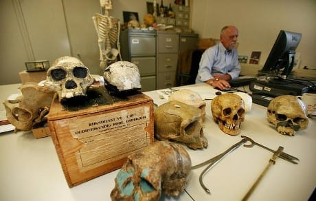 Paleonthology studies the hitory of life on earth Museum naturalis in leiden does research and owns a huge collections of bones, skulls and fossiles