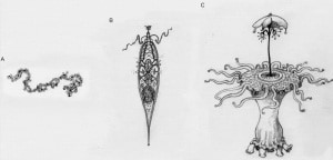 Anche la vita aliena dovrebbe una sua evoluzione simile, o analoga, a quella terrestre. | Helen S. Cooper, Oxford University