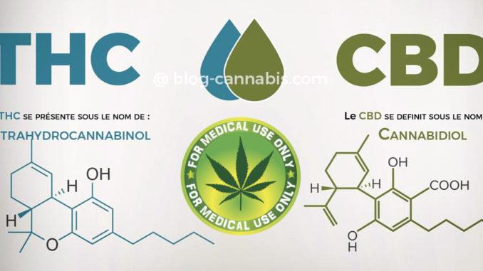 Produzione di cannabinoidi dal lievito di birra