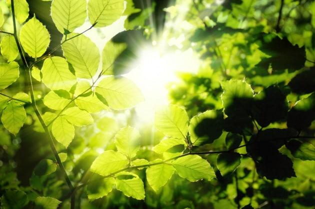 La fotosintesi clorofilliana: un processo di produzione energetica che stiamo da tempo cercando di copiare.|Shutterstock