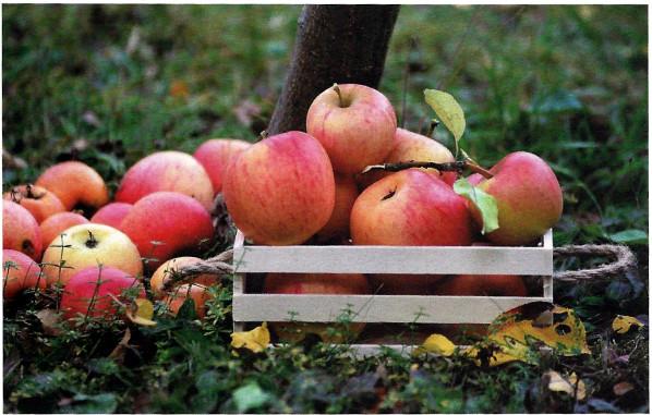 Biodiversità come via alla sostenibilità in agricoltura