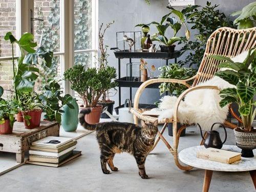 Gli inquinanti dell'aria in casa sono maggiori rispetto alle piante