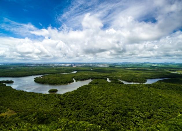 Foresta amazzonica: una pace solo apparente.|