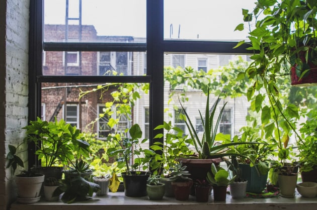 Con tutte le possibili fonti di particelle inquinanti dentro e fuori casa, anche un giardino in salotto finisce per avere un valore puramente estetico.|Shutterstock