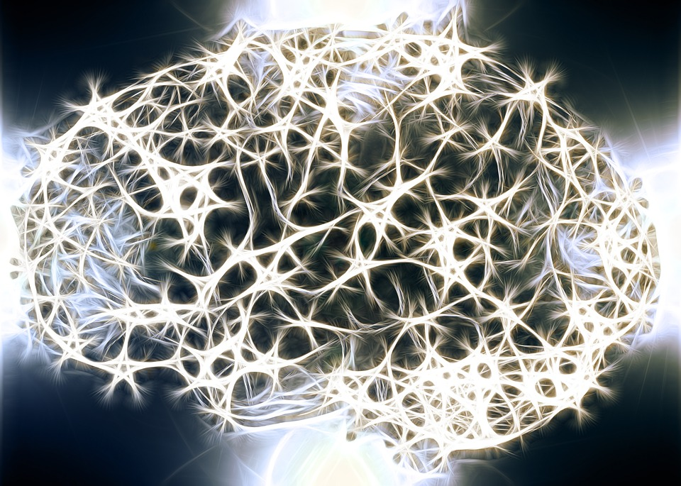 Un cervello sano rinnova i neuroni anche in tarda età