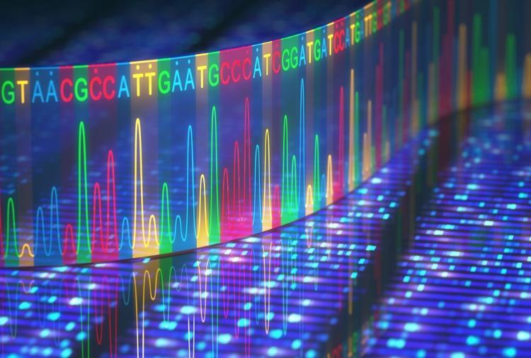 Nelle varianti rare del genoma la causa dell'altezza e massa corporea