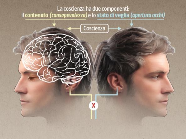 Coscienza componenti
