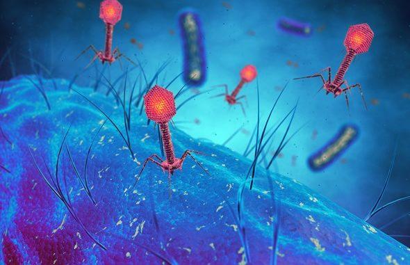 Relazione simbiotica fra batterio e virus inganna i fagociti