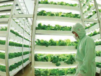 Il futuro della coltivazione per soddisfare il bisogno alimentare