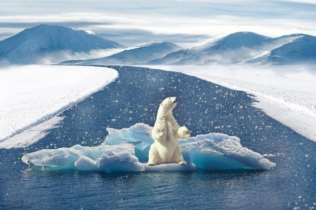 L'orso bianco, il più noto emblema degli assertori del riscaldamento globale e dei cambiamenti climatici in atto, è vittima (anche) della potenza di fuoco delle grandi compagnie petrolifere, che investono milioni di dollari in campagne contro la decarbonizzazione e finanziano il negazionismo sui social network e le attività politiche ed economiche a sostegno dei combustibili fossili.|MaxPixel