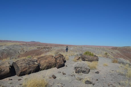 Il Petrified Forest National Park, nel sud dell'Arizona,, un'area già arida, vedrà ulteriormente peggiorare la siccità. In primo piano uno degli alberi fossili che sono stati usati nello studio per stabilire le condizioni di umidità del suolo nel passato. (Cortesia Kevin Krajick/Earth Institute, Columbia University)