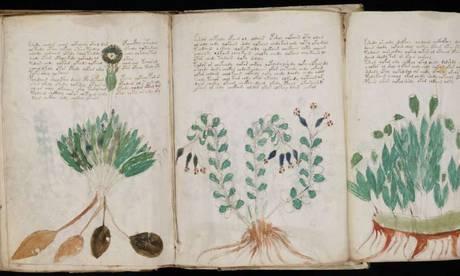 Una delle illustrazioni del manoscritto Voynich (fonte: Yale University)