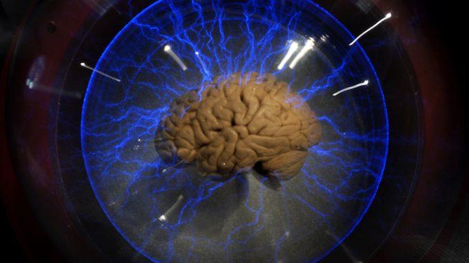 Nuova proteina è in grado di ringiovanire il cervello umano