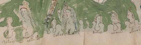 Una delle illustrazioni del manoscritto Voynich (fonte: Voynich manuscript)