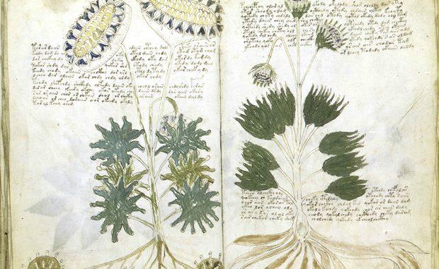 Una pagina del manoscritto Voynich © ANSA/ANSA