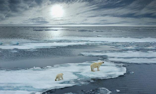 L'orso polare è diventato il simbolo dell'impatto dell'uomo sul clima del pianeta.|FloridaStock / Shutterstock