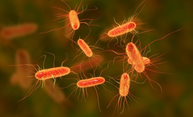 Illustrazione: l'Escherichia coli.|Kateryna Kon / Shutterstock