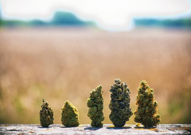 Un'altra ricerca sulle origini della coltivazione di cannabis ci porta tra le montagne della Cina: questa volta, però, si parla del suo utilizzo come sostanza psicoattiva.|Shutterstock