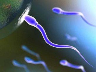 Prime sperimentazioni per l'anticoncezionale maschile