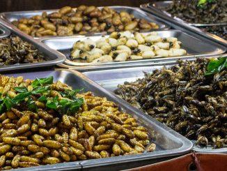 Sfamare la popolazione mondiale con gli insetti