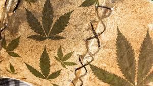 Trovato antico incensiere di marijuana in Cina
