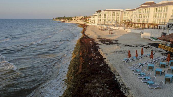 L'Atlantico e inquinato da un'enorme massa di alghe sargasso