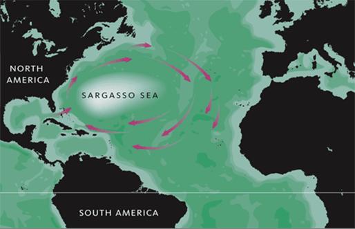 Mar dei Sargassi (Wikimedia)