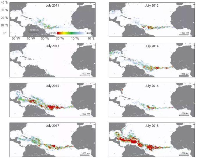 Sargasso visto dal satellite (Mengqiu Wang et al., Science)