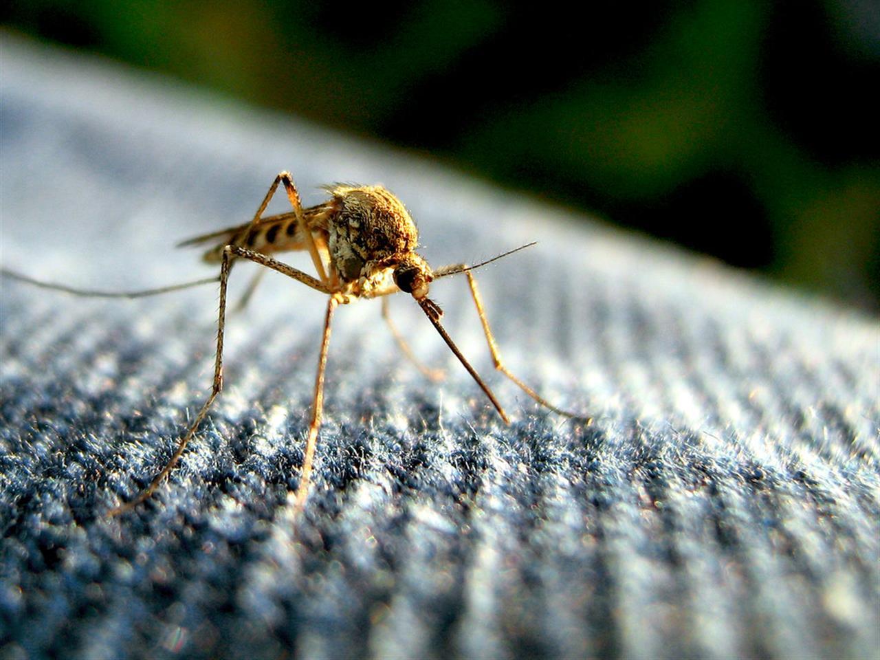 Una seconda pelle in grafene contro le punture di insetti