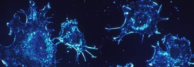 Le cellule cancerose muoiono in assenza di gravità