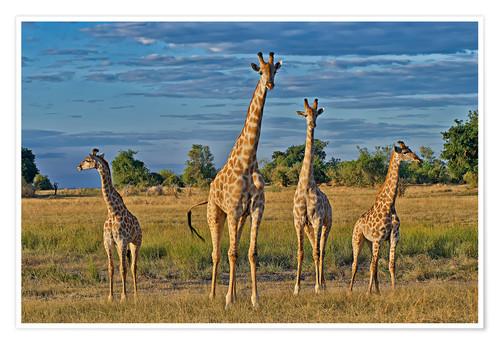 Le giraffe sono una specie in pericolo estinzione