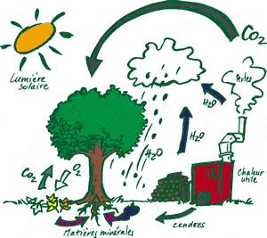 Da cosa dipende la produzione di ossigeno sulla Terra