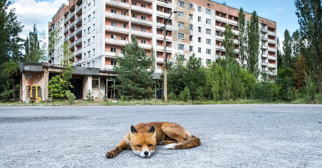 Specie animali si sono adattate alle radiazioni nucleari