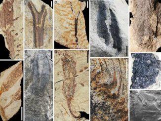 La foresta fossile più antica del Mondo