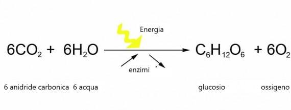 Un semplice schema della fotosintesi; l'energia proviene dalla luce del Sole. Quando si consuma cibo, la reazione si inverte.