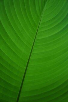 """La struttura di una foglia è uno dei tanti esempi di """"simmetria"""" in natura."""