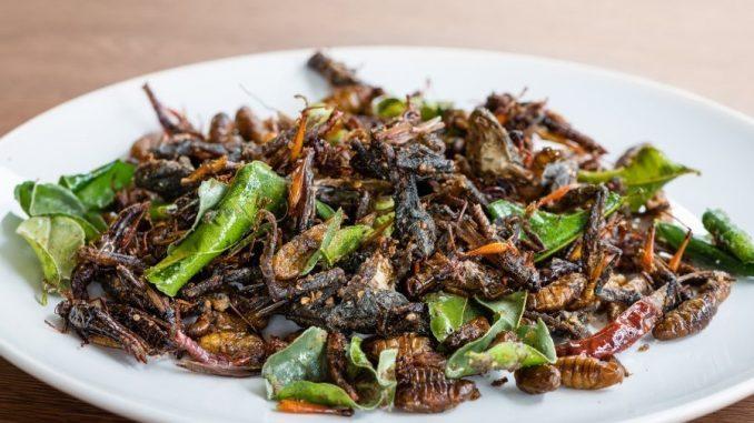 L'UniTe scopre proprietà antiossidanti negli insetti commestibili