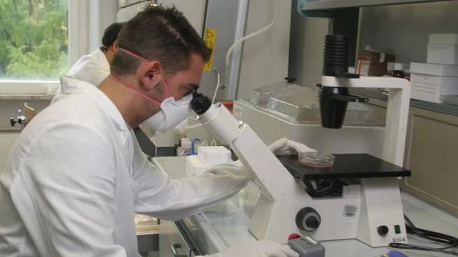 Tumore prostata, nuovo studio sugli effetti della vitamina E (foto d'archivio Pressphoto)