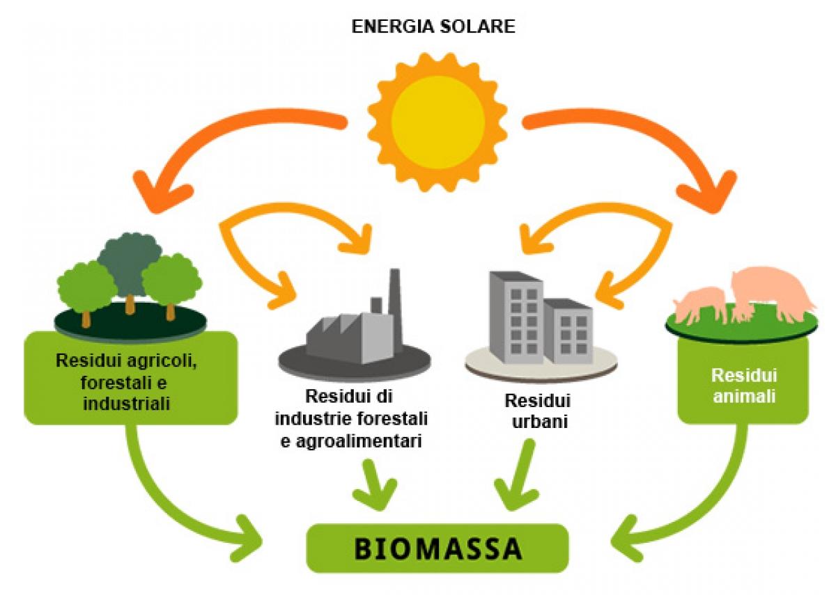 Le biomasse sono davvero ecologiche e sostenibili ?